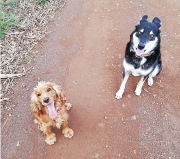 CaptainFI dogs